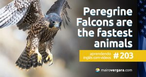 Aprendendo Inglês Com Vídeos #203: Why Peregrine Falcons Are The Fastest Animals On Earth