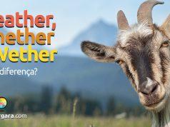 Qual a diferença entre Weather, Whether e Wether?
