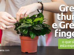 Green Thumb e Green Fingers | O que significam estas expressões?