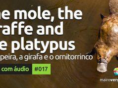 Textos Com Áudio #017 | The mole, the giraffe and the platypus